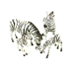 SALE! 4 PCS ZEBRA FAMILY (12 SETS) NV-677